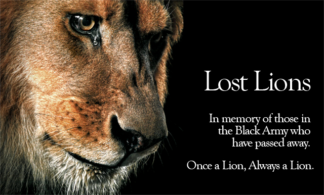 Lost Lions